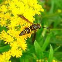 Pollinator 16