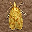 Sparganothis Fruitworm Moth - Hodges#3695 - Sparganothis sulfureana
