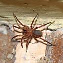 Spider ID?