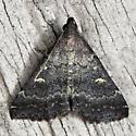 Smoky Tetanolita - Hodges #8366  - Tetanolita mynesalis