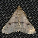 Please help us to identify this moth. - Bleptina caradrinalis