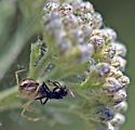 camo spider