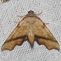 Fervid Plagodis - Hodges#6843 - Plagodis fervidaria - male