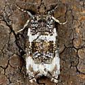 Unknown Moth - Olethreutes glaciana