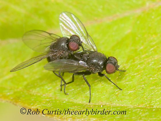 3013310 fly - male - female