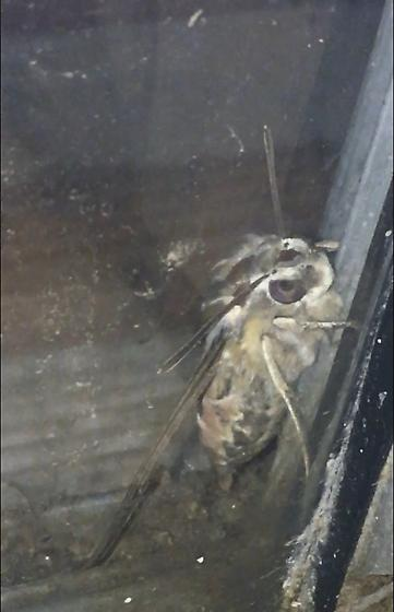 large winged creature (truly freaking out)