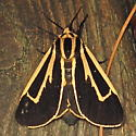 Harnessed Tiger Moth - Hodges #8169 (Apantesis phalerata) - Apantesis phalerata