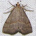 Moth -- ID request - Zelicodes linearis