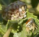 Orange jumper and resin bee nest - Dianthidium