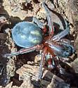 Spider Eugene, OR