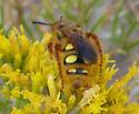 Some Kind of Wasp? - Crioscolia alcione