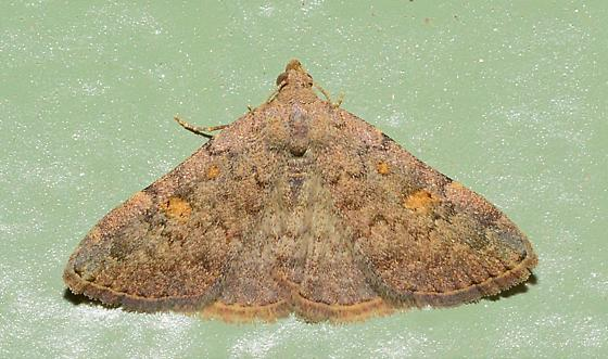 Moth10 - Idia