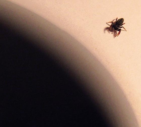 Oklahoma U.S.A. I found this very small (1/4