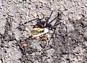 Large colorful spider found in parking lot