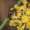 Tiny Bee? - Ceratina
