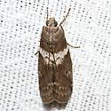 5775.1 - Salebriaria fasciata