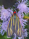 Veined Ctenucha Moth - Ctenucha venosa