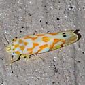 Erythroneura Leafhopper - Erythroneura
