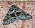 February Moth, Maybe an Underwing? - Phigalia denticulata