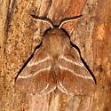 Moth ID - Malacosoma americana