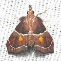 Hodges#5555 - Penthesilea sacculalis