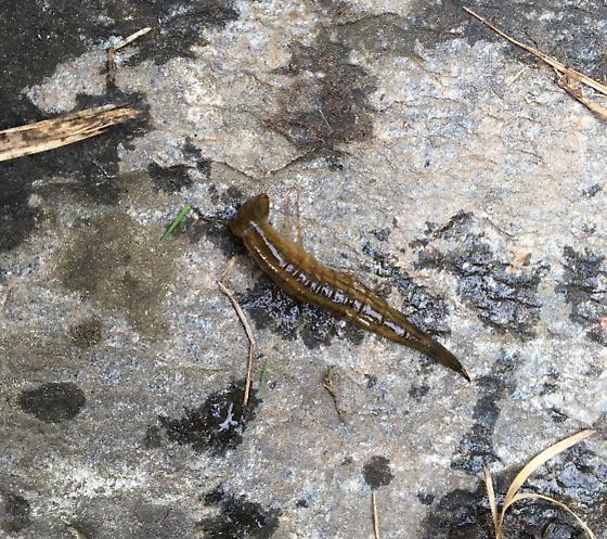 Weird Bug By Vermont Pond