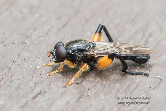 Help to ID this Dipteran - Chalcosyrphus curvarius - male