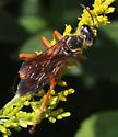 Great Golden Digger Wasp (Sphex ichneumoneus)? - Sphex ichneumoneus