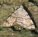 Moth - ID me - Idia americalis