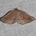 moth unknown - Stenaspilatodes antidiscaria