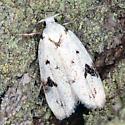 moth - Inga sparsiciliella