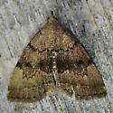 Little Brown Moth - Zanclognatha dentata