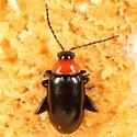 Black flea beetle with red pronotum - Disonycha xanthomelas