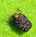 warty leaf beetle Exema sp.? - Exema