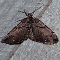 Variable Carpet Moth - Anticlea vasiliata