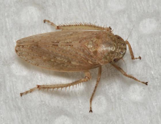 Tiny flesh colored moth
