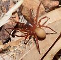 Spider on ground