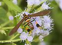 moth? - Horama panthalon