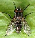 Fly Oct 5 - Paradidyma
