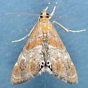 4892  - Dicymolomia metalliferalis