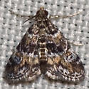 Waterlily Leafcutter Moth - Hodges #4755 - Elophila obliteralis