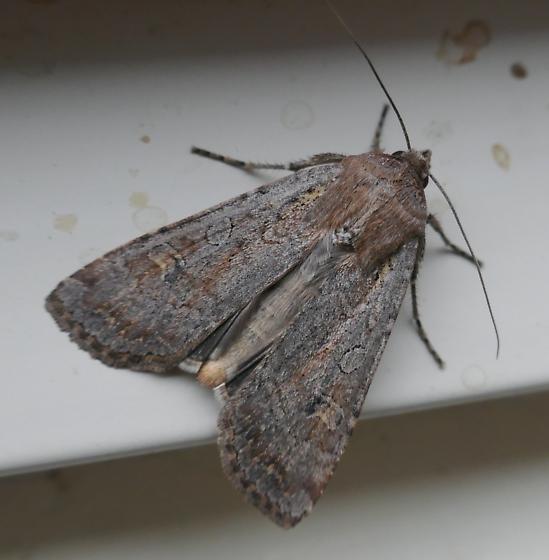 moth - Colorado