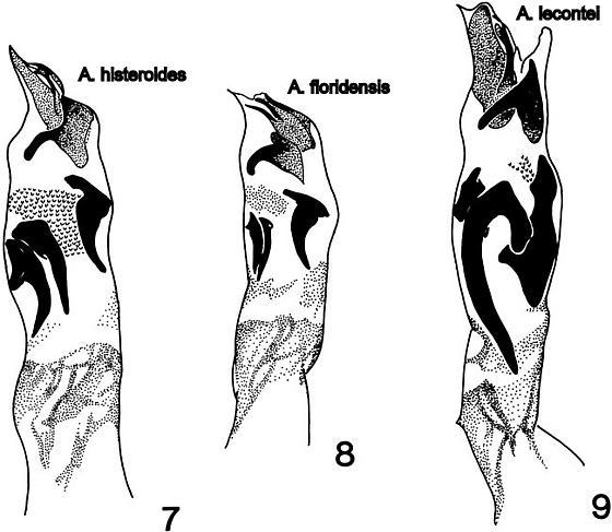 Ateuchus Info Page - Ateuchus