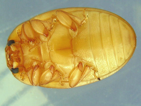 And the answer is... - Tritoma unicolor