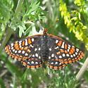 Nymphalinae 6.28.09 02 - Euphydryas anicia - female