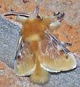 Megalopyge opercularis