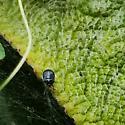 Unknown Beetle