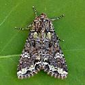 Bertha Armyworm - Mamestra configurata