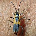 Bug On My Arm - Chauliognathus basalis