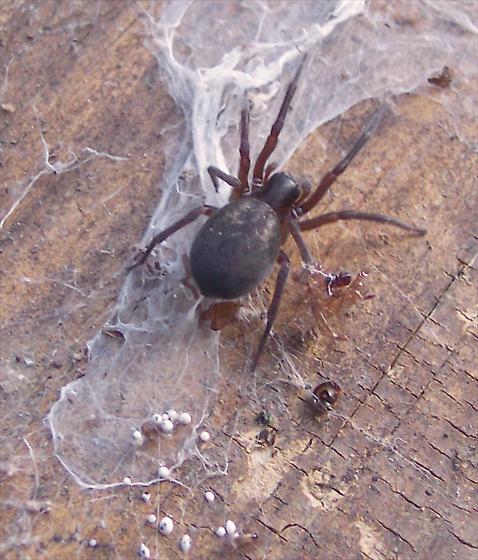 spider_05-07-2010_CHD